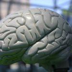 Jak medycyna naturalna wpływa na funkcjonowanie mózgu?